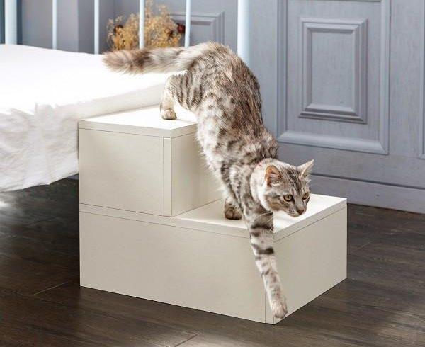 cat steps
