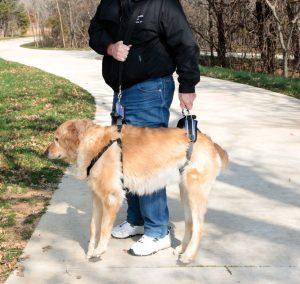 Full Body Dog Lifting Harness