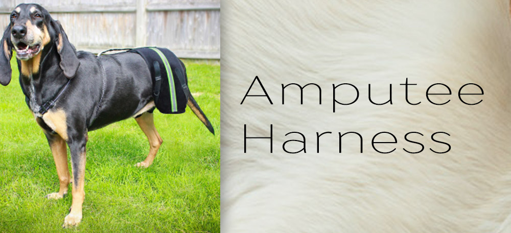 Dog Amputee Harness